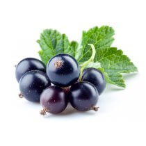 Black Currant (TFA)